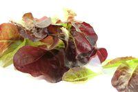 crunchy red lettuce