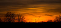 Sunset with windmills and trees