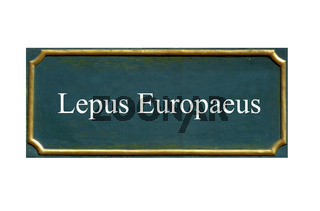 schild feldhase, lepus europaeus, bedrohte tierart