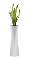 houseplant in concrete pot isolated on white background