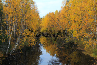 vortex of yellow leaves on the salmon river