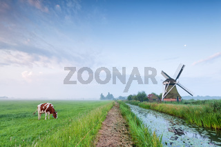 cow grazing on pasture by river and windmill