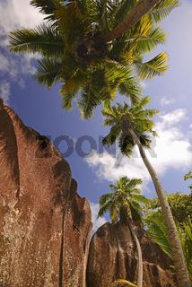 Palmen und Granitfelsen, Strand Source d'Argent, Insel La Digue,