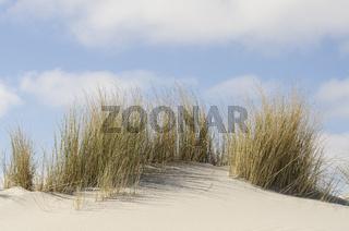 Dunes with marram grass