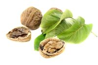 crunchy walnuts with walnut leaves