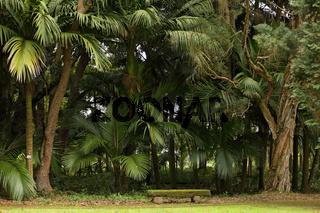 Park in Ponta Delgada, Sao Miguel, Azores
