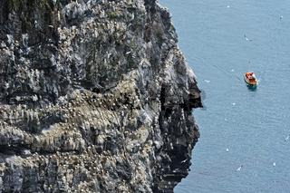 am Vogelfelsen Rundebranden, Insel Runde, Norwegen
