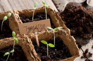 Sprouting tomato seedlings with lettering