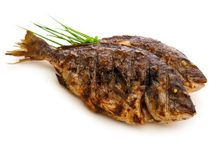 Two roasted dorade fish  isolated.