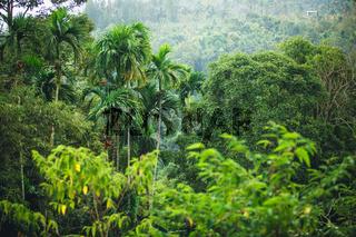 jungle of Thailand
