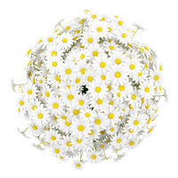 top view of daisies in vase isolated on white background