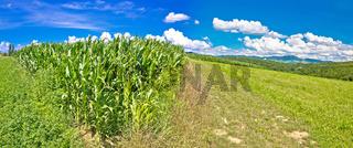 Agricultural landscape panorama in Prigorje region