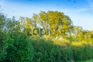 Landschaft am Dümmer See-81