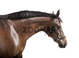 Pferdekopf freigestellt