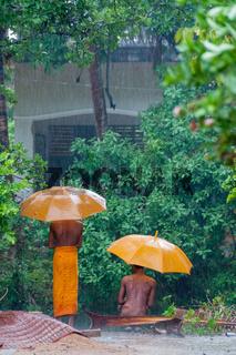 Two Orange monks with umbrella in the rain