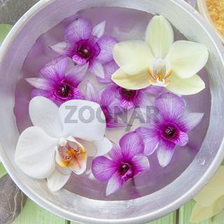 Frische bunte Orchideen