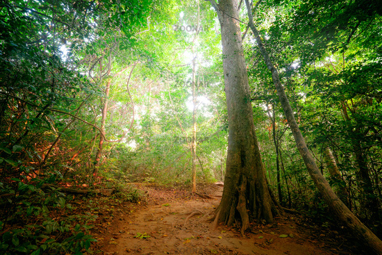 Fantasy tropical forest with road path way