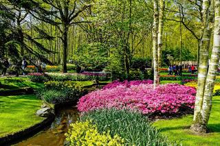 Keukenhof - Largest flower garden in Europe