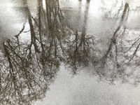 sidewalk with puddles and trees reflection