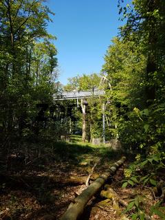 Baumkronenweg, Hessen, Buchenwald, Nationalpark, Kellerwald