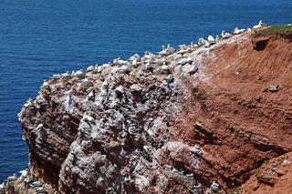 Vogelfelsen auf der Insel Helgoland, Deutschland, on famous Island Heligoland, Germany