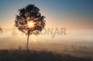 sunshine through tree during misty morning
