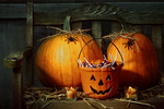 Pumpkins and spiders with candles on bench