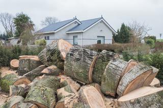 Transformed sawn tree.