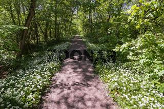 Naturschutzgebiet Kuehkopf-Knoblochsaue   Nature reserve, Germany