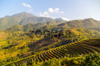 Rice fields on terraced Vietnam