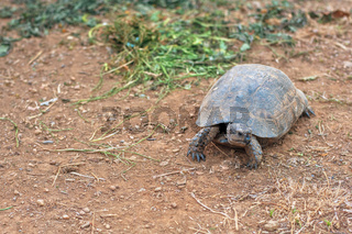 Turtle on the land