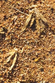 Desert sand pattern texture