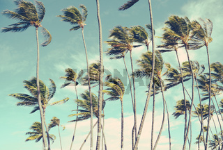 Retro Vintage Hawaii Palm Trrees In The Wind