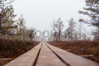Footbridge along Kemeri bog. Kemeri National Park, Latvia