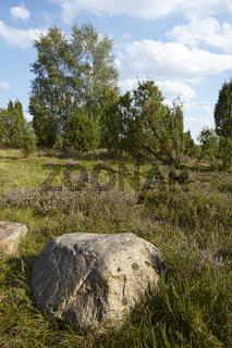 Lüneburger Heide - Heidelandschaft mit Felsbrocken