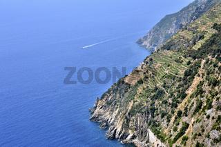 Steile Weinberge der Küste, Cinque Terre