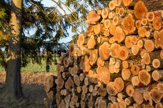 Forstwirtschaft Holzernte Holzpolter