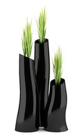 three houseplants in black vases isolated on white background