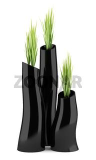 three houseplants in black vases isolated on white background