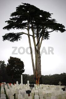 Nationalfriedhof San Fransisco