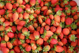 strawberry,Da Lat, dalat, fruit, agriculture