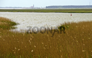 Boddenlandschaft mit Reedpflanzen