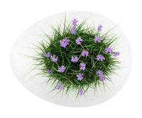 top view of flowers with grass in concrete pot isolated on white background
