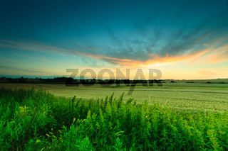Beautiful sunset on a spring field