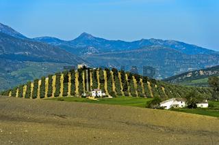 Landschaft mit Finca vor einem Olivenhain, Andalusien, Spanien