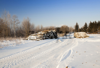 felled trees .  snow