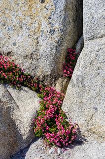 Tioga Pass, Yosemite National Park, Sierra Nevada, USA
