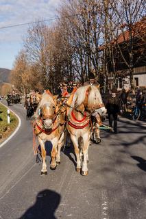 Schliersee, Deutschland, Bayern 08.11.2015: Pferde