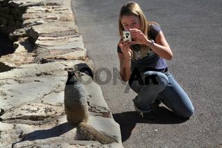 Junge Frau übt als Naturfotografin mit einem zutraulichen Grauen Eichhörnchen