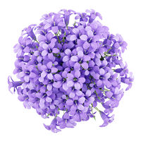 top view of purple flowers in pot isolated on white background